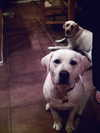 See_the_sea_dogs_sampson_and_maggie