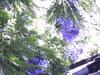 Treehouse_003